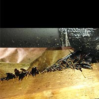 Wasp Elimination in RI