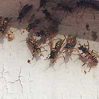 Wasp Nest Control in Rhode Island