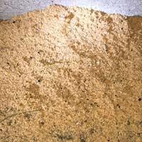 Carpenter Ant Control in Rhode island
