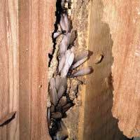 Termite Elimination in RI