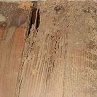 Termite Exterminator in RI