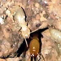 Termite Control in Rhode Island