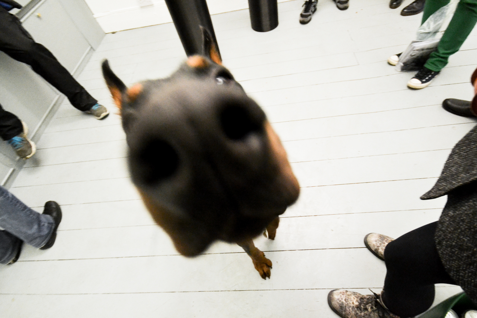 Private View, Performance with trained doberman dog.