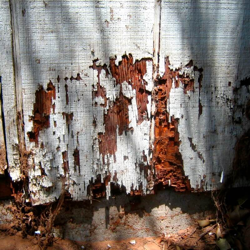 Crandell Pest Control can help prevent termite damage to your home.