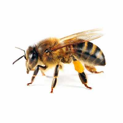 bee removal in mesa az