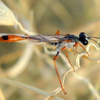 Arizona wasp before being exterminated by Crandell Pest Control