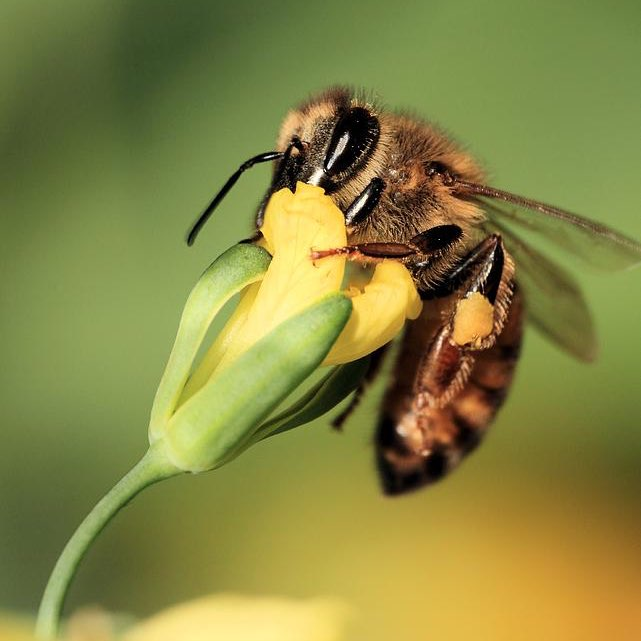 Arizona Honey Bee before being exterminated by Crandell Pest Control