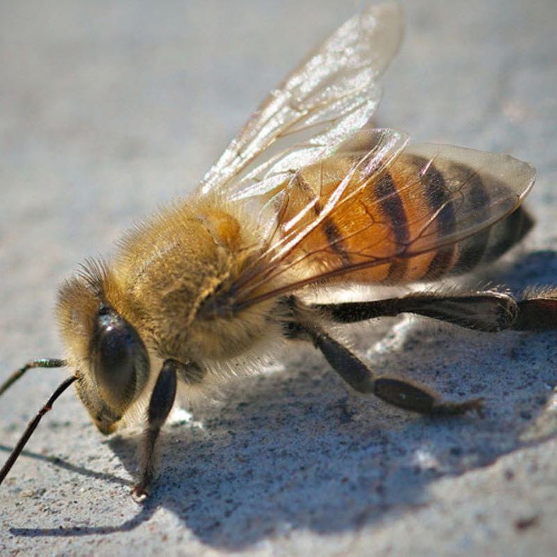 Crandell Pest Control Services will remove all your bees and wasps