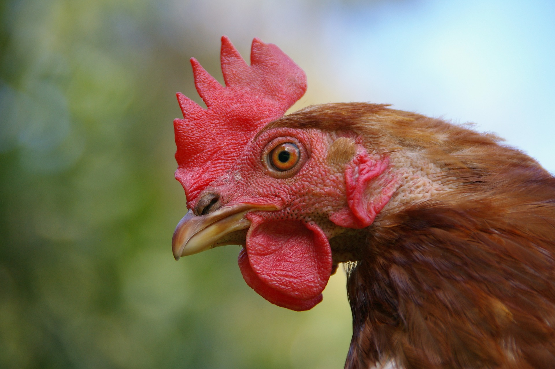 FSA to review food safety claims at United Kingdom chicken supplier