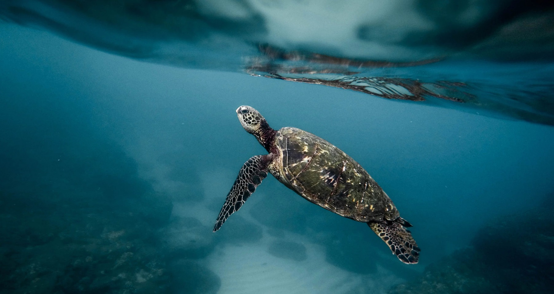 Oxygen levels in Earth's oceans continue to drop
