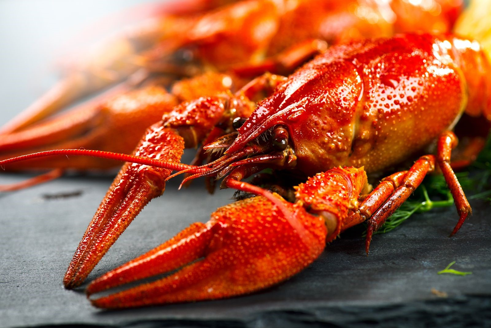 Crawfish Is Truly a Popular and Well-Loved Seafood in Houston, Texas