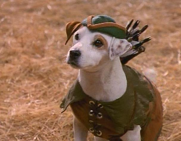 puppy wearing a robin hood outfit