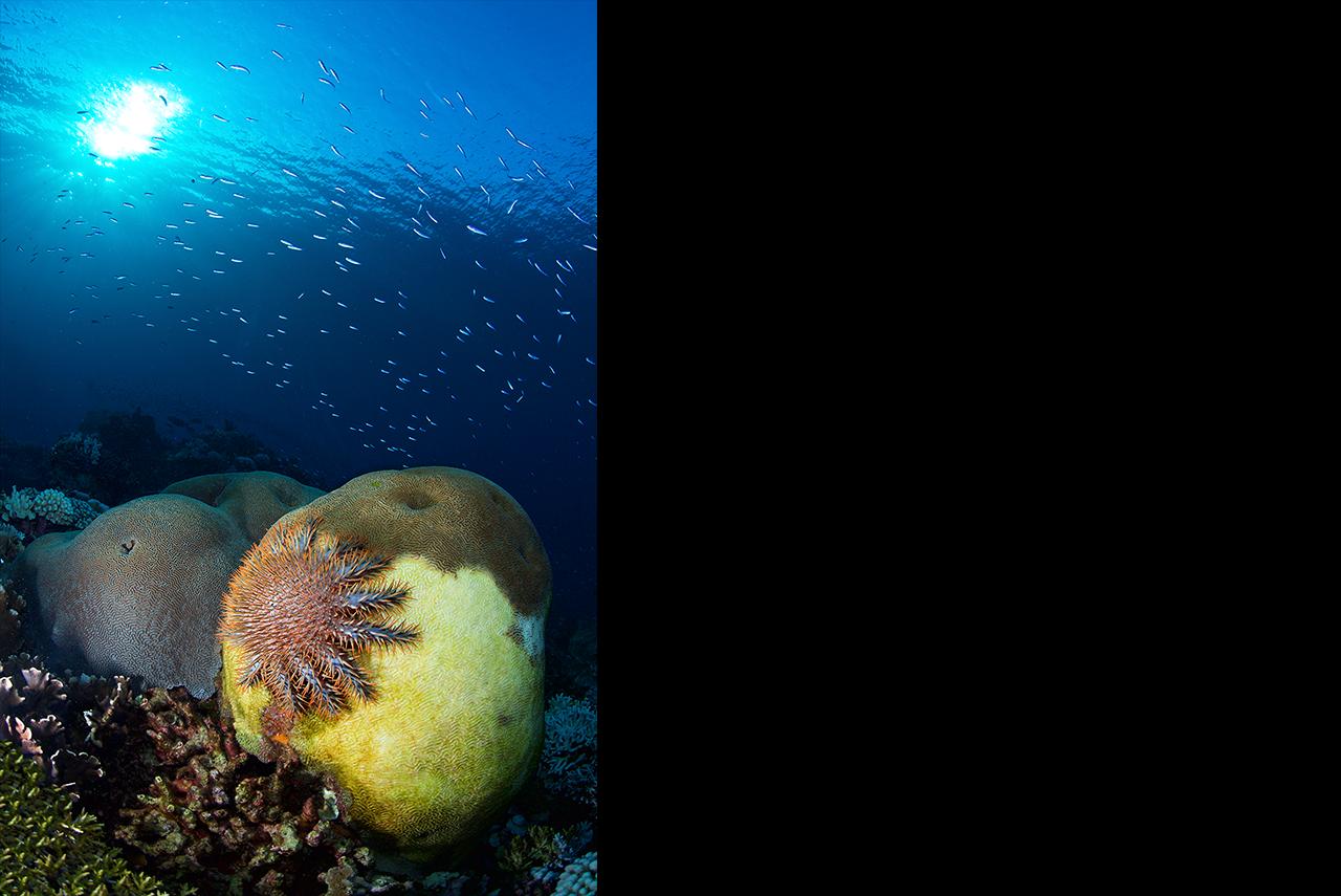 coral reefs need help essay