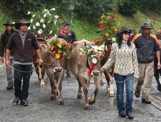 A celebration of cows, La Fouly, Switzerland