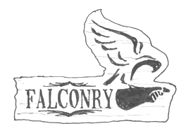 Falconry Branding by Starke Creative
