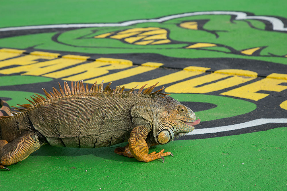 Located inside the water park, Reptile World gives children and adults alike a chance to see these wild creatures up close and personal, with special hands-on learning experiences led by experts. (Photo: Darcy Daniels)