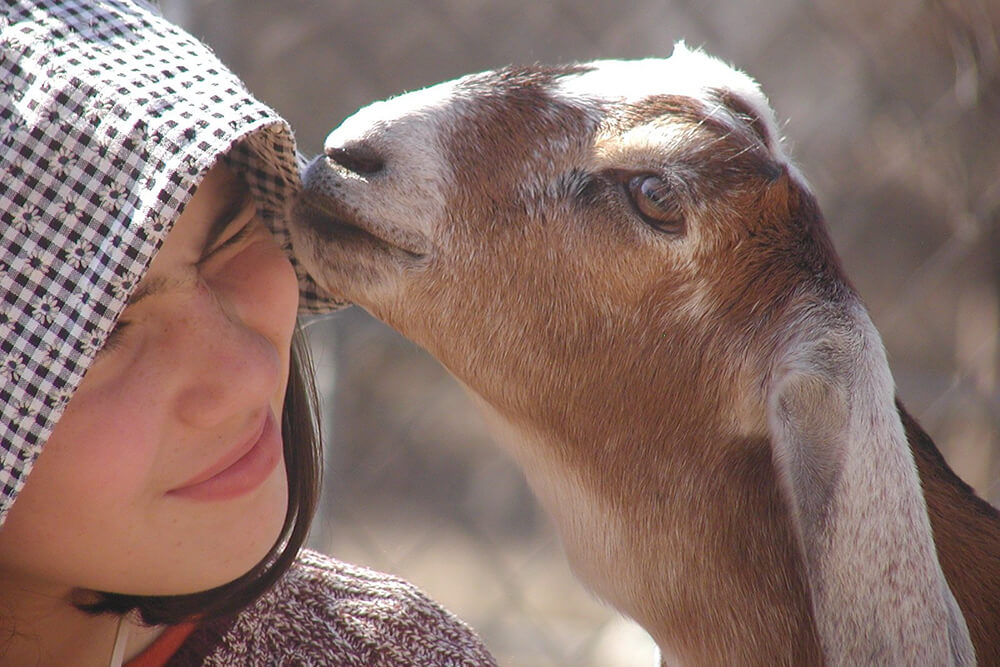 Goats are a lot of work, but they can be pretty rewarding too. (Photo: Jennifer Zehnder)