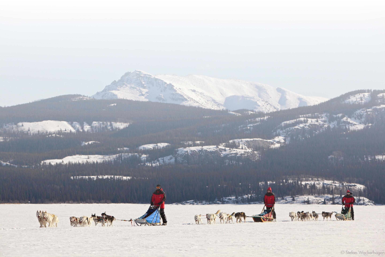 Book your tour with Aurora Borealis Yukon