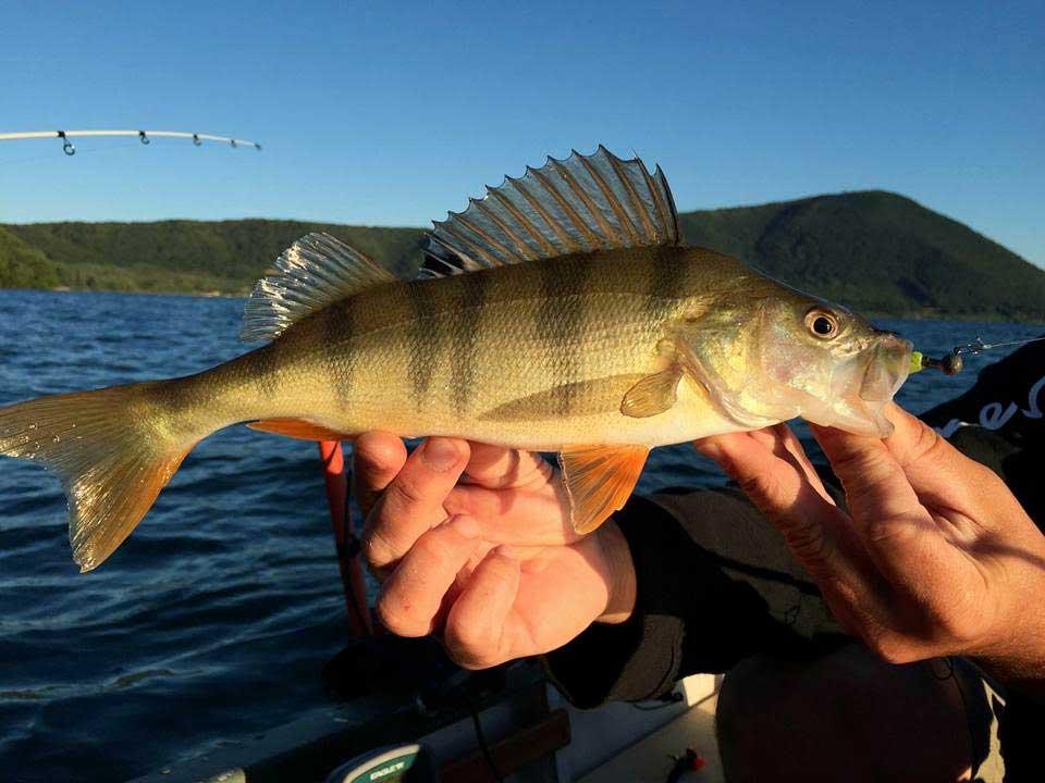 Fishing Perch Vico Lake