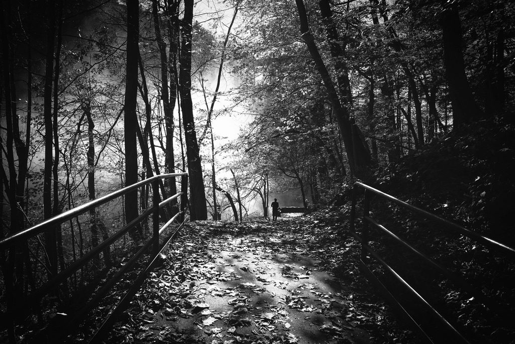 black and white bridge in the forest