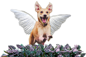 Image d'un chien