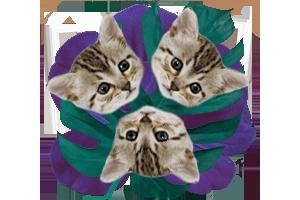 three cat picture