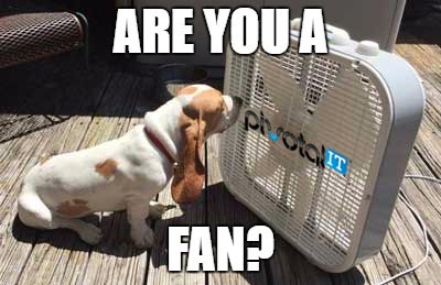 Buffy the basset hound in front of a fan