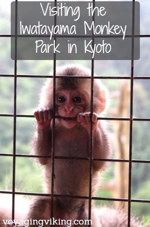 | Voyaging Viking | The Monkey Park in Kyoto