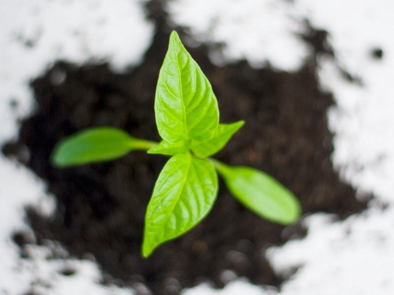 growing leaf in soil
