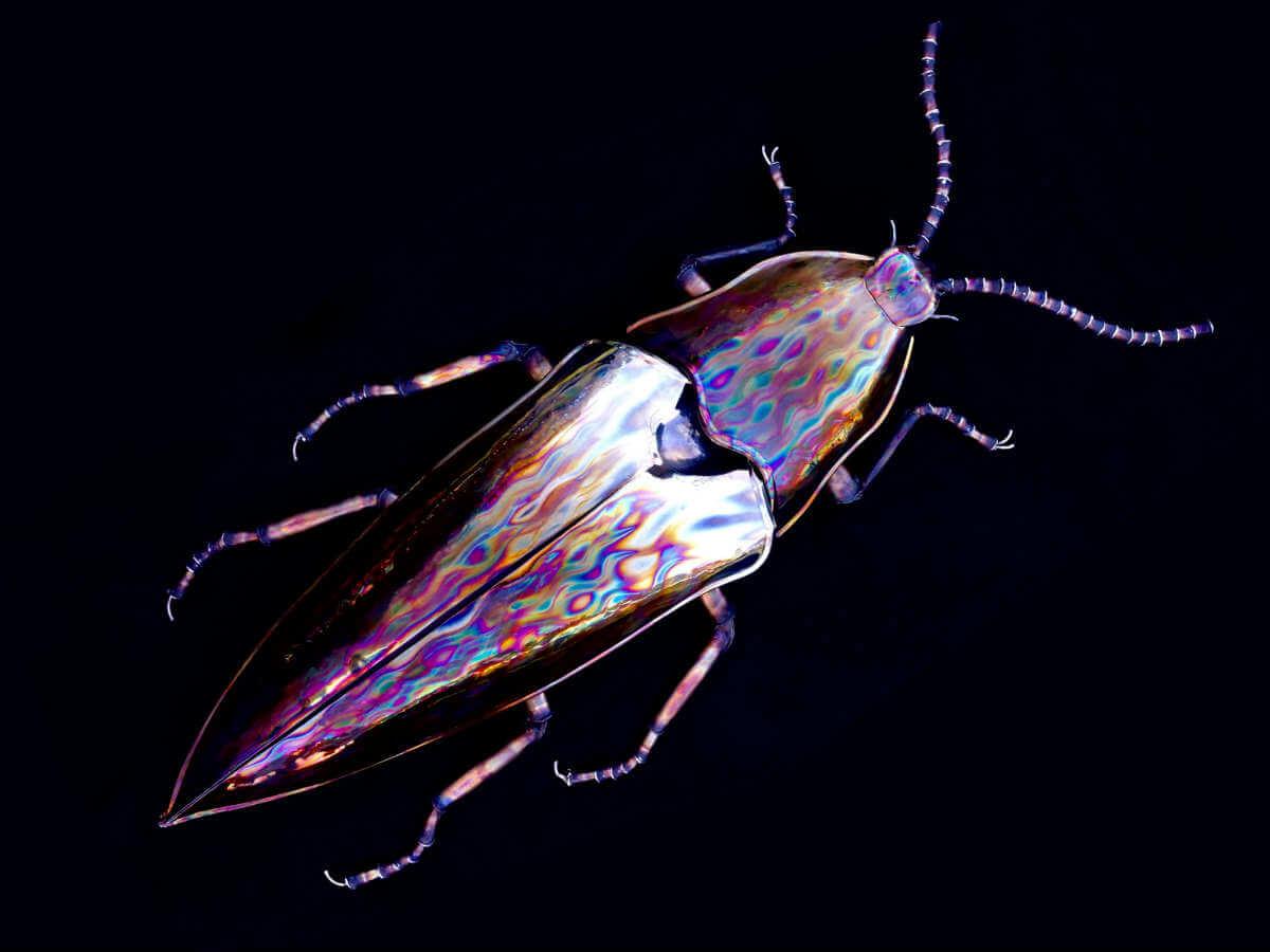Polished metal beetle sculpture