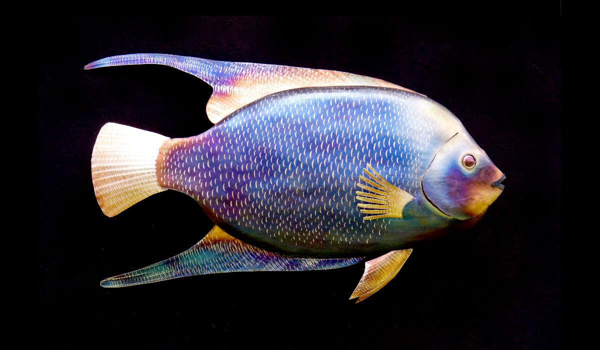 Metal saltwater angelfish sculpture