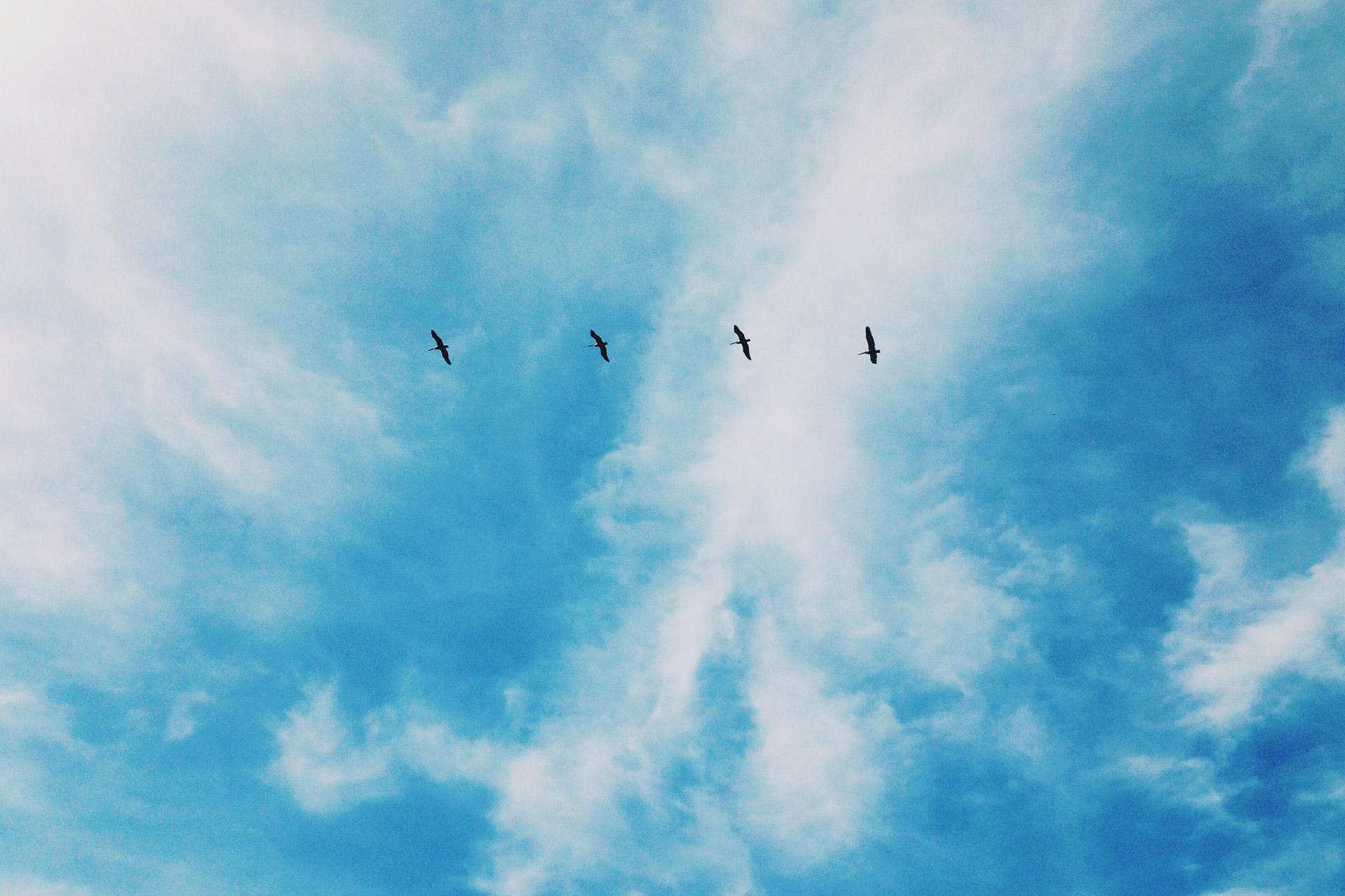 birds flying high together