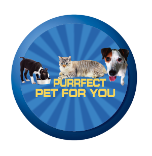 Perfect Pet For You Video