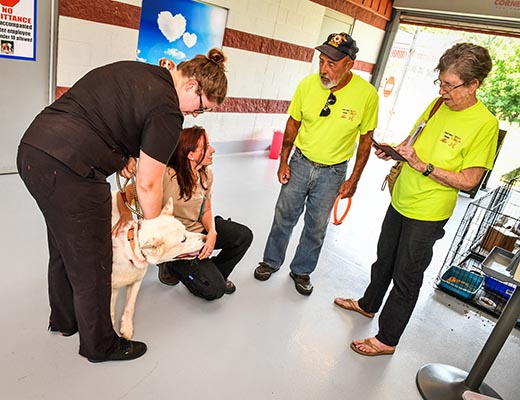 Shelter staff place dog with rescue organization