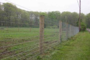 Woven Wire for Cattle
