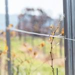 Metal Trellis Fence