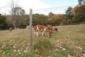 Woven Wire Alpaca