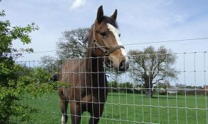 Woven Wire Horse Fence