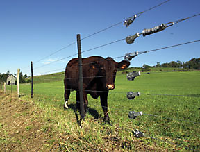 Electric Fencing For Horses Amp Fence Installation Profence