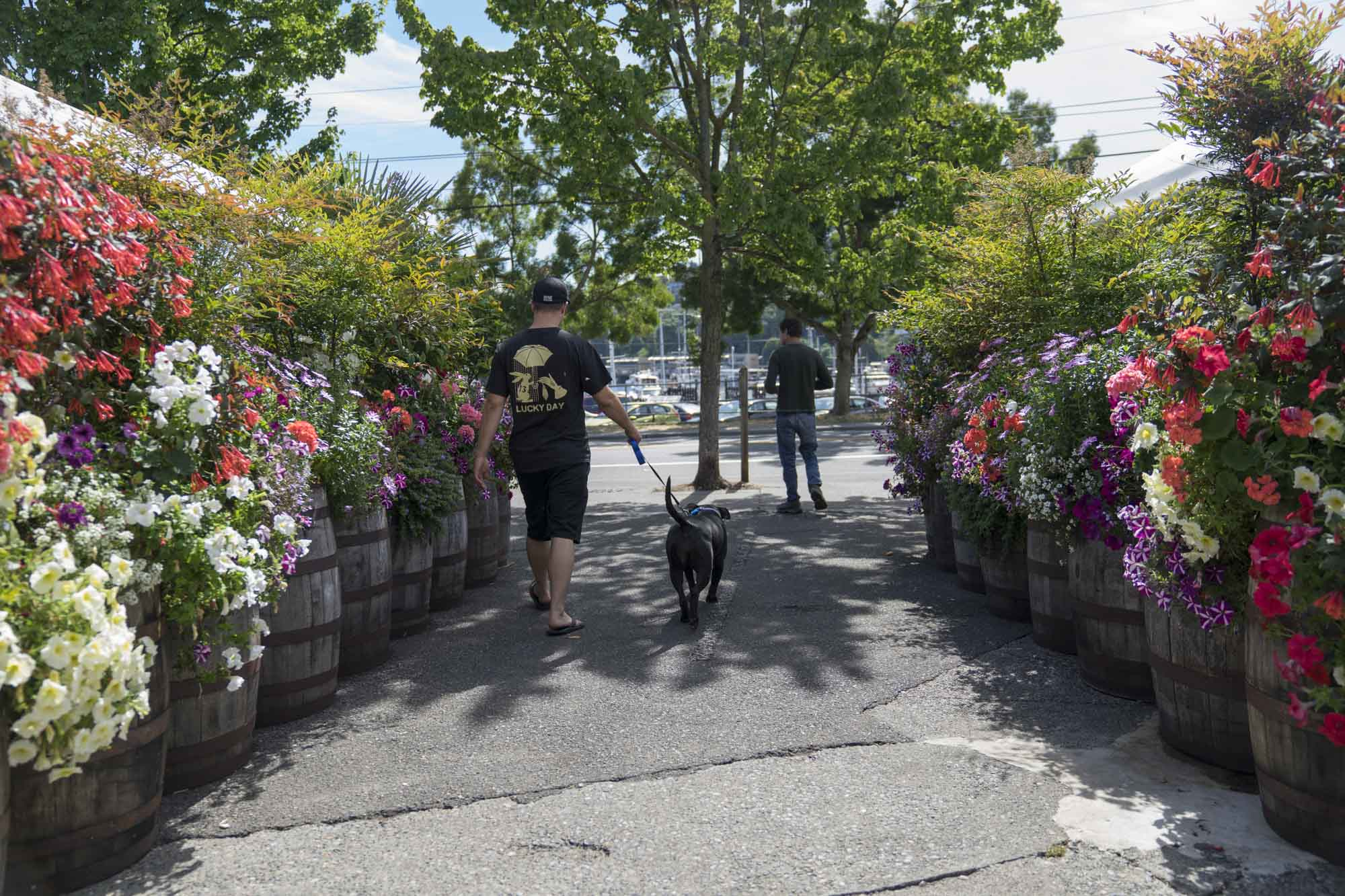 A dog walking through flowers outside of Fremont Brewing in Seattle.