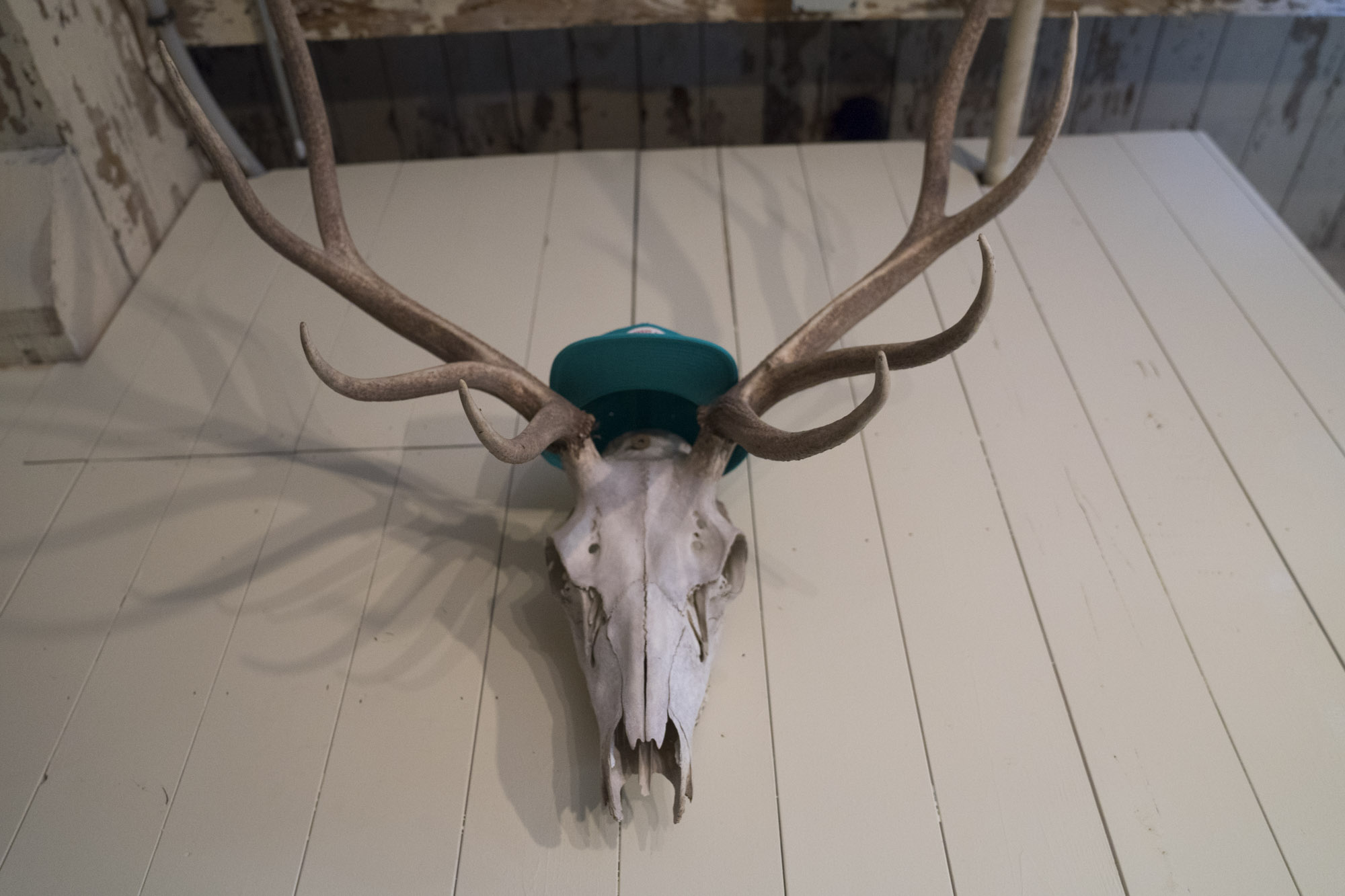 A deer head with antlers on the wall at Cloudburst.