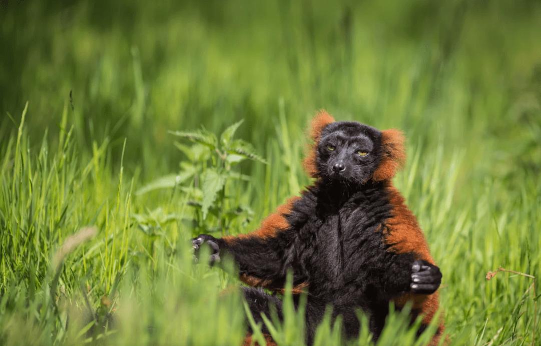 Animal meditando
