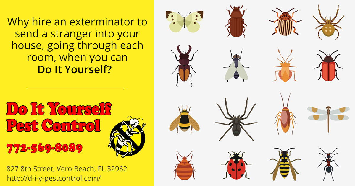 Do it yourself pest control vero beach diy products solutioingenieria Image collections