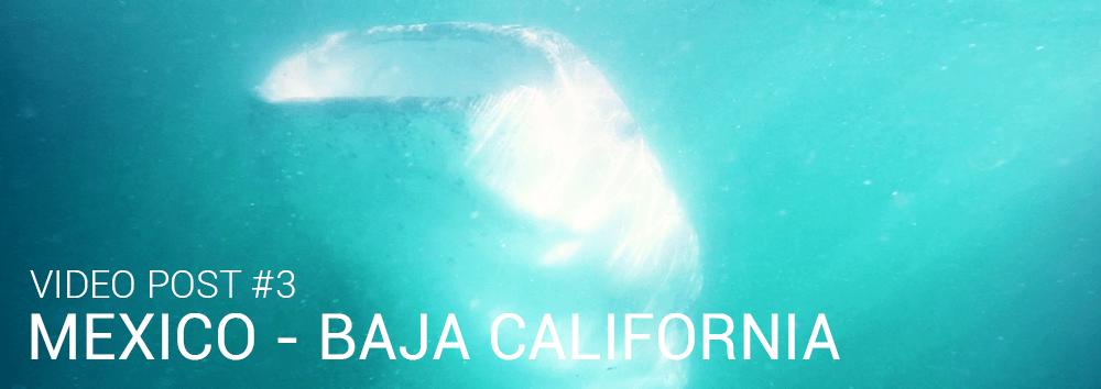 Whale Shark La Paz Baja California