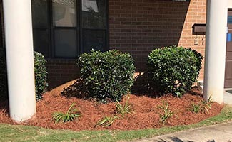 landscape maintenance and bush trimming service