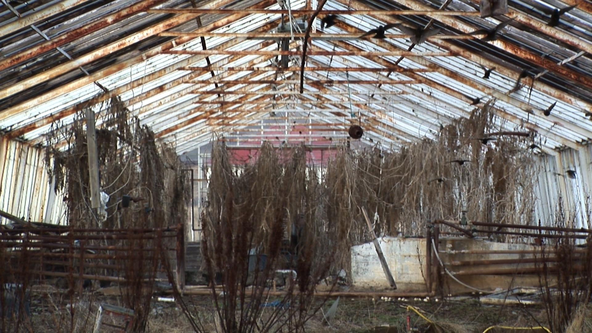 Glasshouse 1_Sigurdur_Gudjonsson